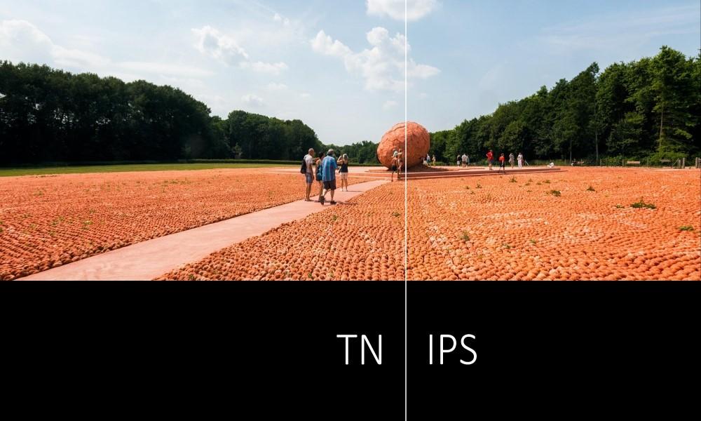 TN-panel-versus-IPS.jpg