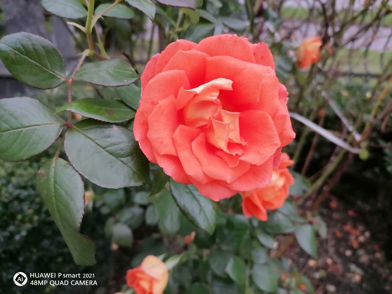 photo_2020-10-20 13.35.42.jpeg
