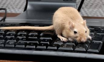 Секрети комп'ютерної миші: якої шкоди може завдати звичний аксесуар?
